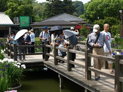 菖蒲池で写真撮影