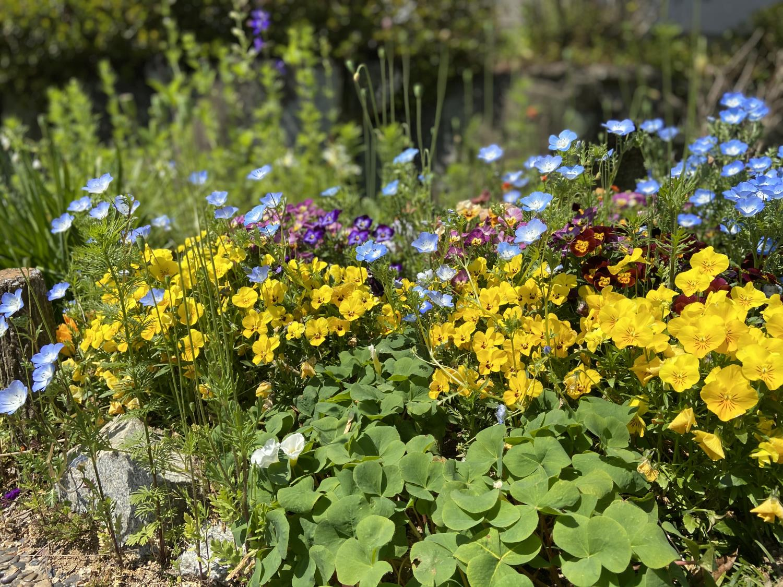 コミュニティ道路の春の花々